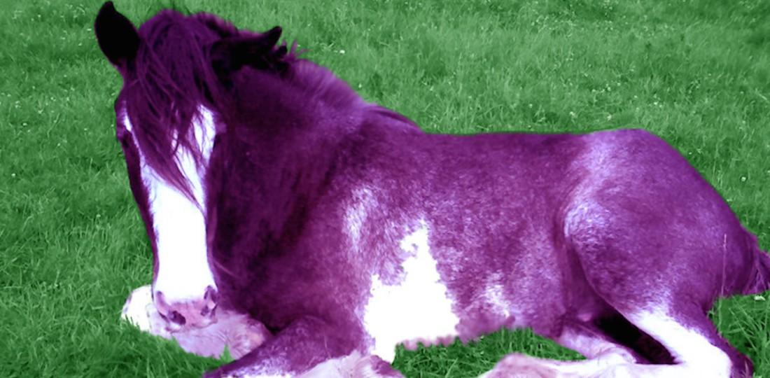 Having purple hair made me better at my job